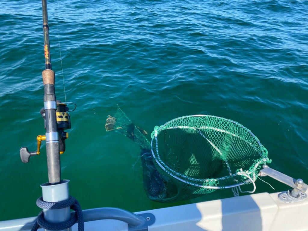Dagens første fladfisk i nettet